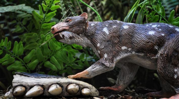 """Descubren una nueva especie de mamífero de la """"Era de los dinosaurios"""""""
